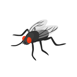 pest fly