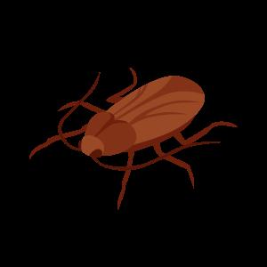 pest roach